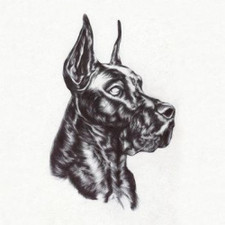 Great Dane - Alpha Dog - LP Vinyl
