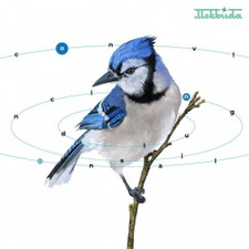 Mekbuda - Convincing Delusional - LP Vinyl