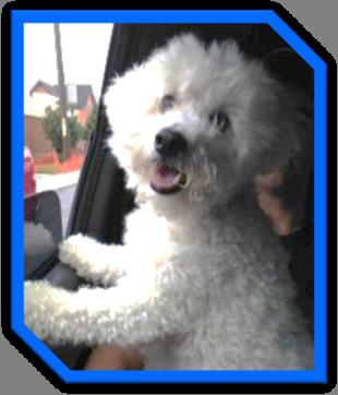 Gizmo the Dog