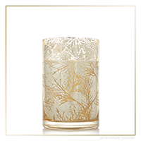 Thymes Forest Cedar Candle - Medium | James Anthony Collection