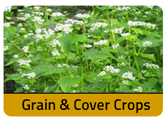 Grain and Cover Crops