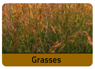 Grass Seeds at Merit Seeds in Ohio