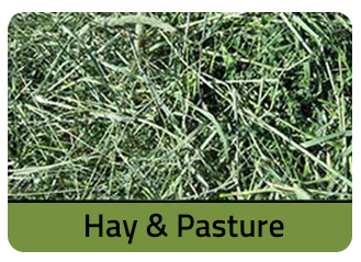 Hay and Pasture Seeds at Merit Seeds in Ohio