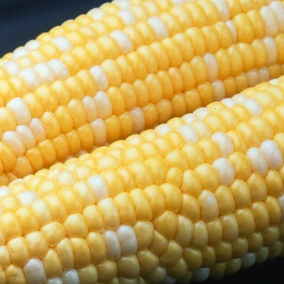 Ambrosia Sweet Corn Seeds