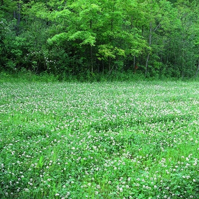 Classic Whitetail Seeds - Perennial