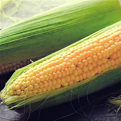 Gold Nuggets Sweet Corn Seeds | Garden Seeds | Merit Seed