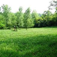 Platinum Ultra Perennial - Wildlife Food Plot | Merit Seed