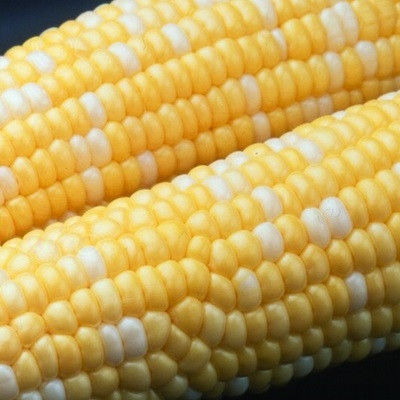 Peaches & Cream Sweet Corn - Garden Seeds   Merit Seed