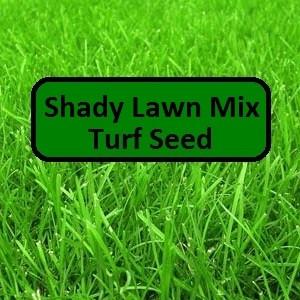 Shady Lawn Mix