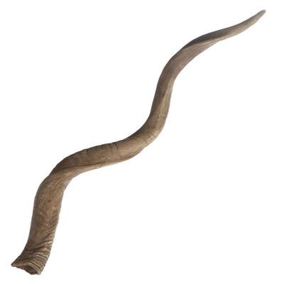 Blonde Curved Kudu Horn