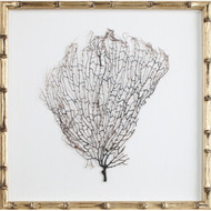 Natural Sea Fan