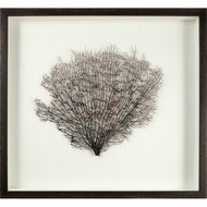 Large Natural Sea Fan