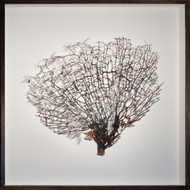 Grande Natural Sea Fan