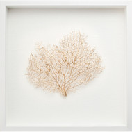 Gold Sea Fan