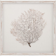 Salvaged White Sea Fan