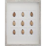Mole Cowrie Shells