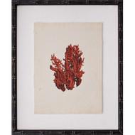 Mini Red Coral V