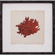 Mini Red Coral II