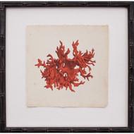 Mini Red Coral III