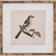 Mini Nozeman Bird II