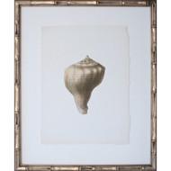 Vintage Shell III