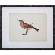 Vintage Bird I