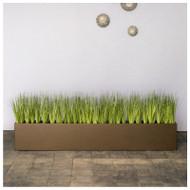 Short Japanese Grass in Custom Rectangle Planter