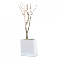 Sandblasted Redwood in Tall White Rectangle Planter