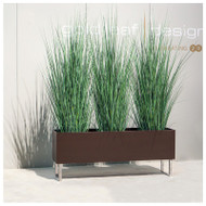 Tall Japanese Grass in Custom Rectangle Planter