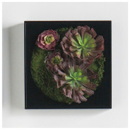 "Mini Green Wall 12""SQ Burgundy Echeveria"