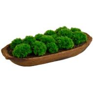 Moss image 1