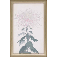 Paragon Elegant Chrysanthemum IV