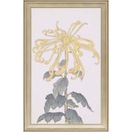 Paragon Elegant Chrysanthemum II