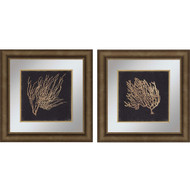 Paragon Gold Coral II Phttps://cdn3.bigcommerce.com/s-nzzxy311bx/product_images//k/2