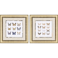 Paragon Butterfly Study Phttps://cdn3.bigcommerce.com/s-nzzxy311bx/product_images//k/2