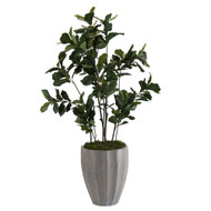 John Richard Fiddle-Leaf Fig Tree I