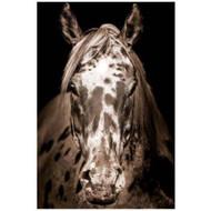 Paint Horse(Custom)(EP)