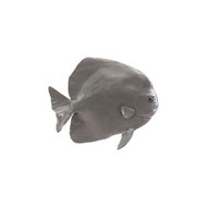 Phillips Collection Australian Batfish, Polished Aluminum