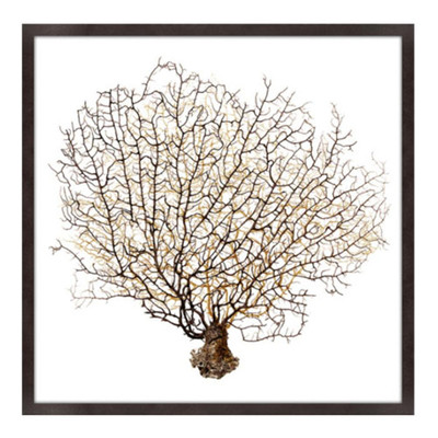 Underwater Branches II