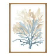 Plant of Aqua I