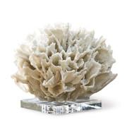 Regina Andrew White Ribbon Coral (Store)
