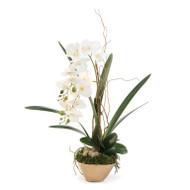 John Richard Willow Orchid (Store)