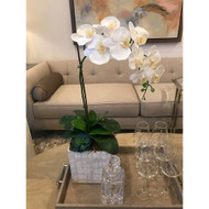 Topography Home Paradiso Orchids (Store)