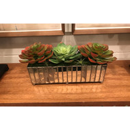 Topography Home Mirror & Succulents (Store)