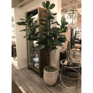 Topography Home Fiddle Fig Tree (Store)