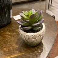 Topography Home Miniature Succulents (Store)