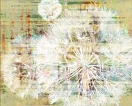 Art Classics Leaves and Dandelions VII