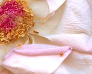 Art Classics Pop Art Florals 3