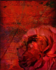 Art Classics Ruby Peony on Red Abstract