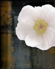 Art Classics White Peony on Dark Abstract